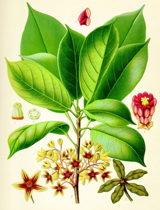 List of drugs with herbal background?